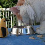 Histoire oiseau rencontre chat chien